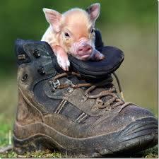 cochon mignon